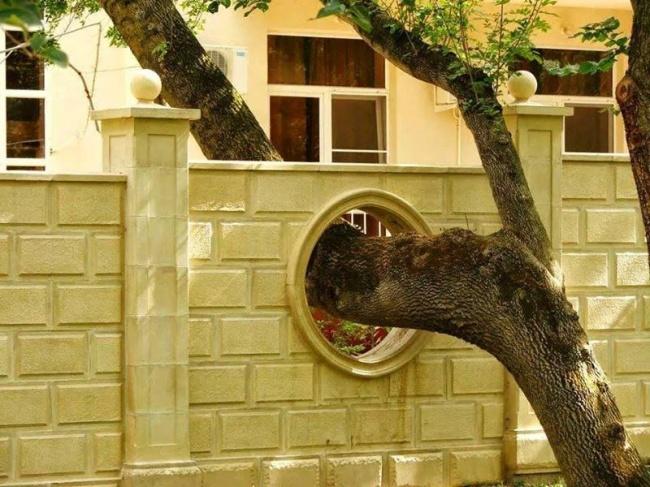 Convivência com a Natureza, exemplos em Like3ZA.pt, árvore no muro