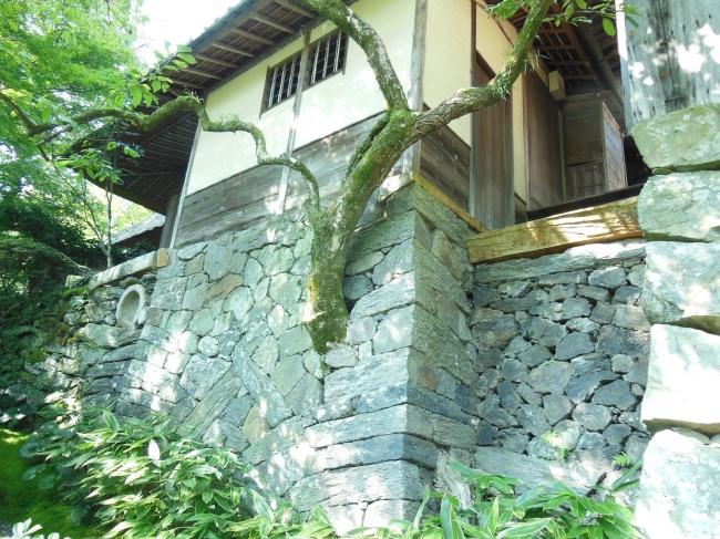 12-arvore-,muro