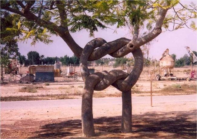 Insólito - tronco entrelaçado