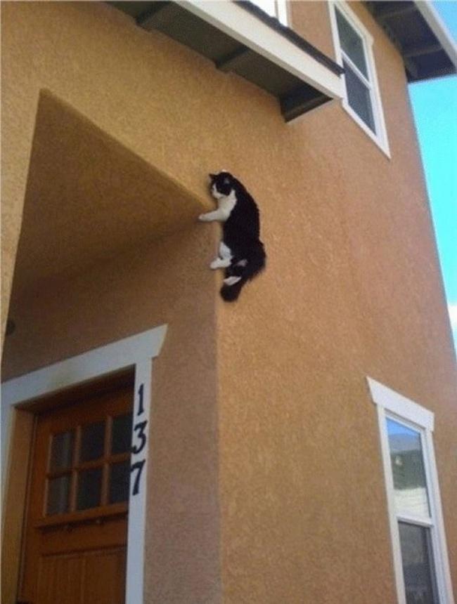 Insólito - gato trepador de paredes