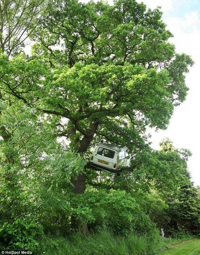 Insólito - carro em cima de árvore