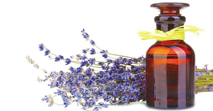 7 Formas de Eliminar Maus Odores da Casa