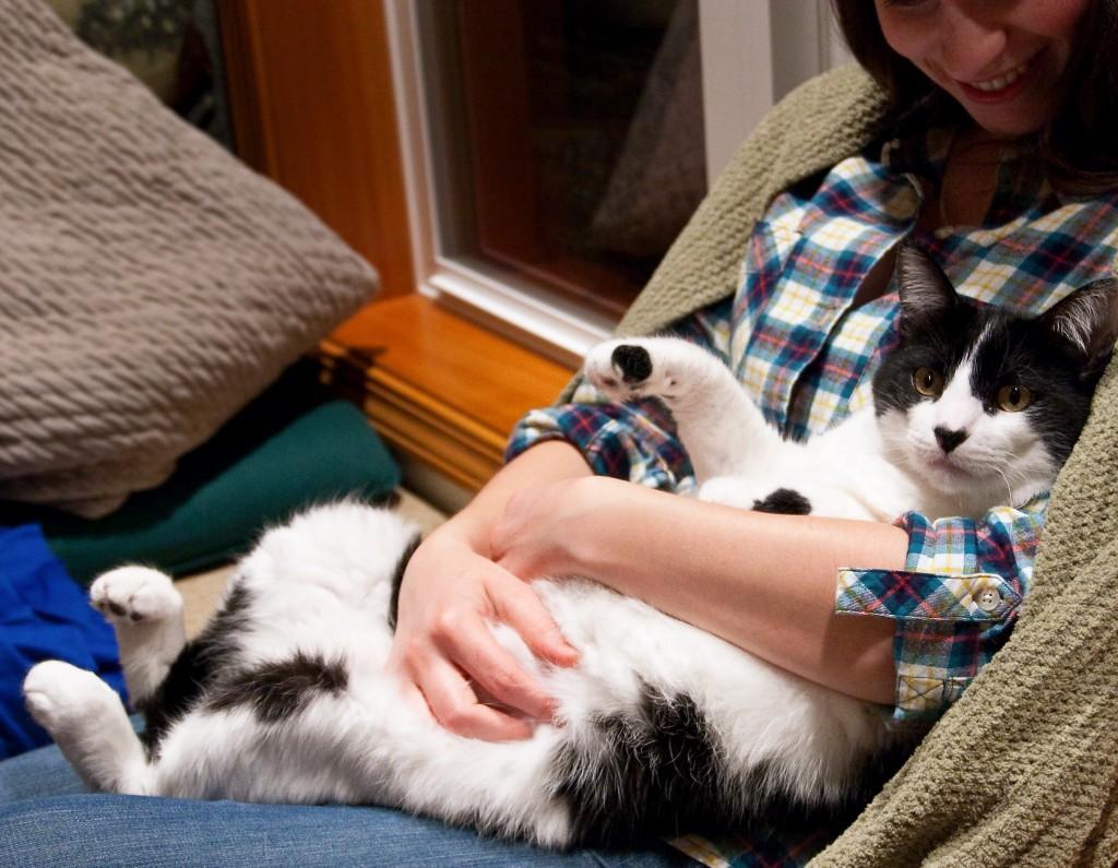 Factos sobre gatos - ailurofilia