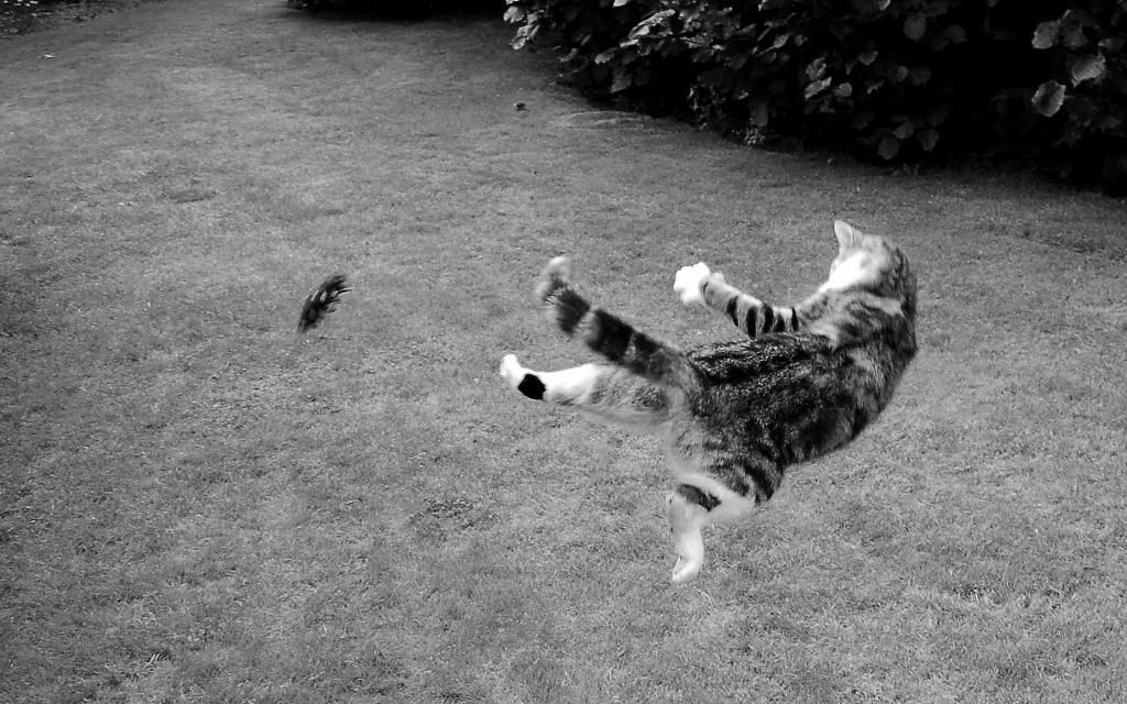 Factos sobre gatos -  Um gato consegue saltar cinco vezes a sua altura