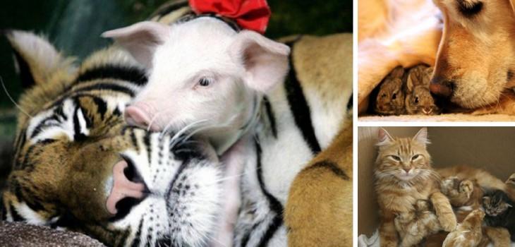 10 Mães coragem que adotaram filhos de outras espécies
