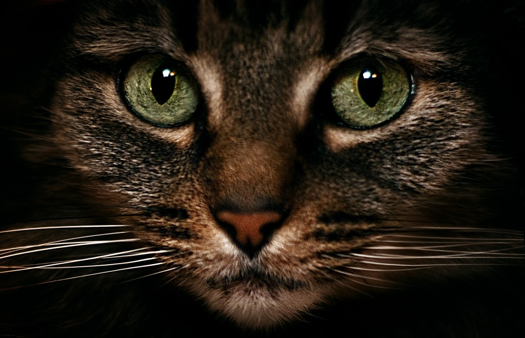 Factos sobre gatos  - Pupilas verticais