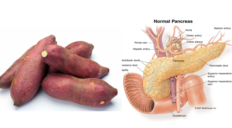 Alimentos Parecidos com os Orgãos que Curam - batata doce e pâncreas