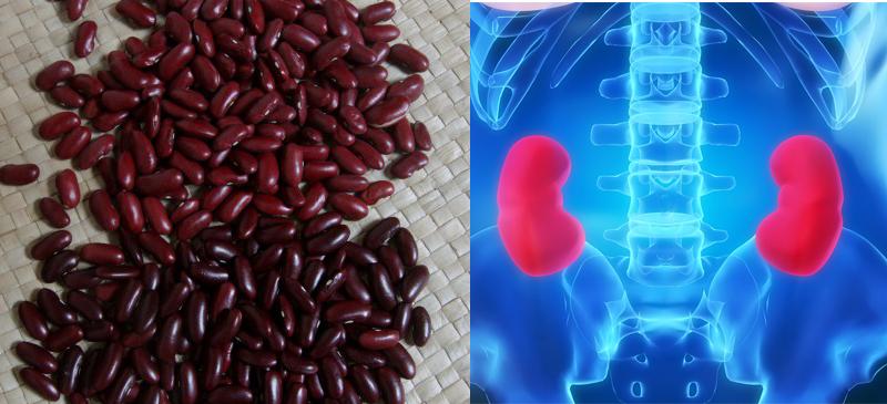 Alimentos Parecidos com os Orgãos que Curam - feijão e rins
