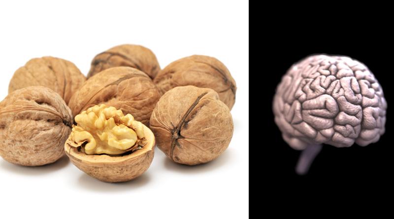 Alimentos Parecidos com os Orgãos que Curam - noz e cérebro