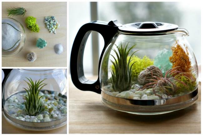 Dar vida nova a velhos utensílios de cozinha - transformar a cafeteira em aquário