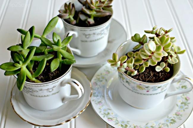 Dar vida nova a velhos utensílios de cozinha - transformar chávenas em vasos de flores