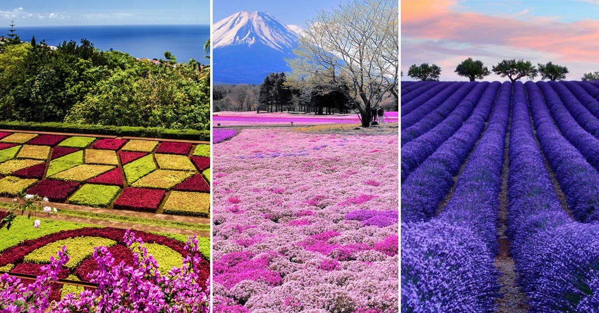 13 Campos de flores maravilhosos