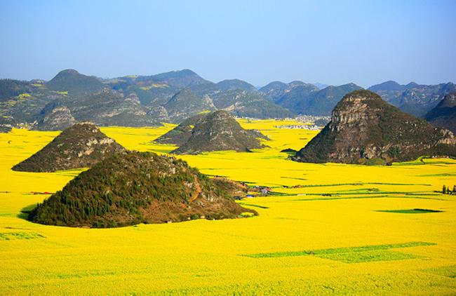 13 Campos de flores maravilhosos - Campos de flores canola, Luoping, China