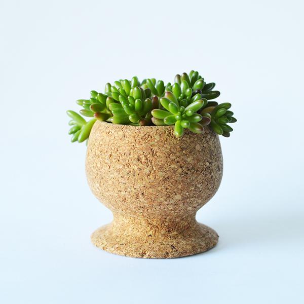 Usos surpreendentes da cortiça - vaso de plantas