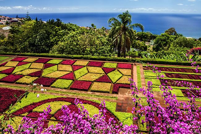 13 Campos de flores maravilhosos -  Jardim Botânico, Madeira, Portugal