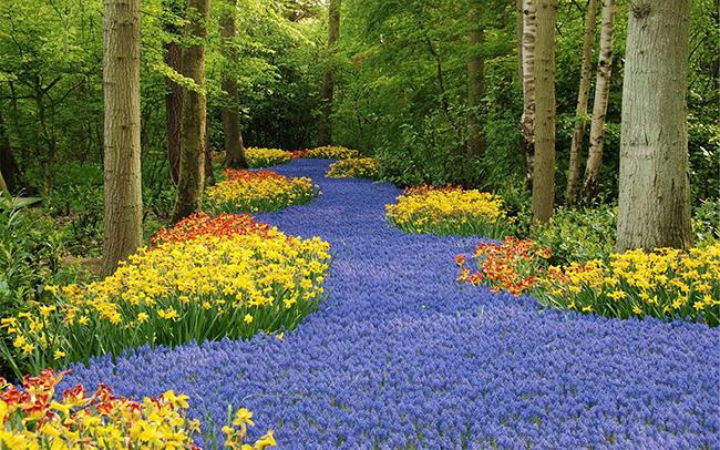 13 Campos de flores maravilhosos - Keukenhof Garden, Lisse, Holanda