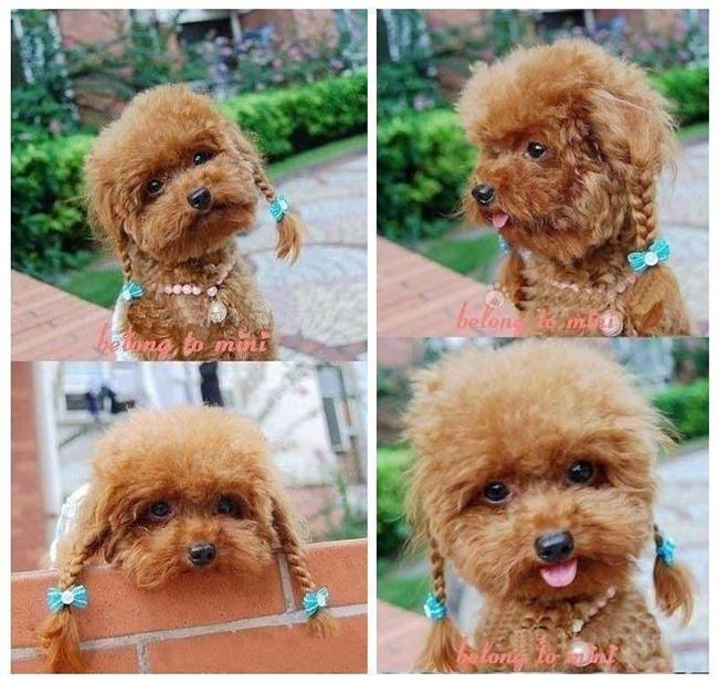 Penteados de ganir por mais - tosquia de cadela, penteada com trancinhas
