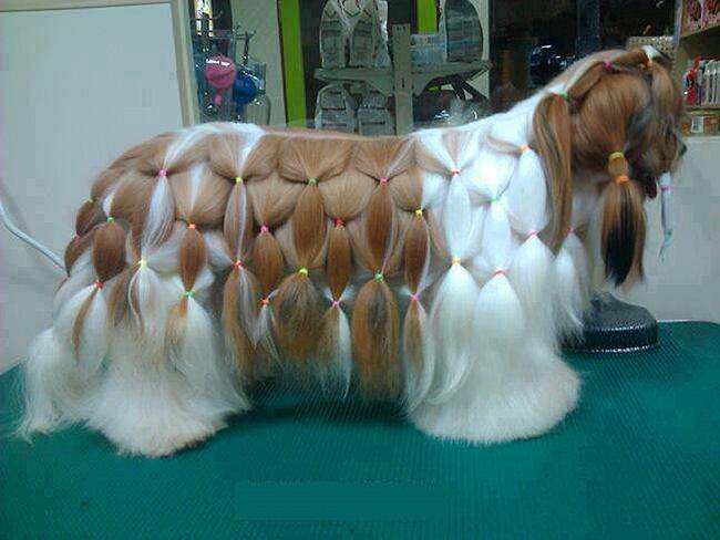 Penteados de ganir por mais - tosquia de cão, penteado rabos de cavalo