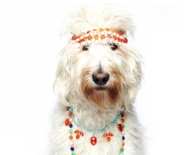 Penteados de ganir por mais - tosquia de cão, penteado hippie