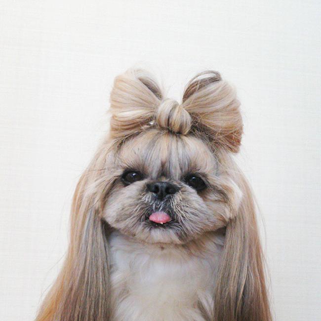 Penteados de ganir por mais - tosquia de cadela, laçarote na cabeça