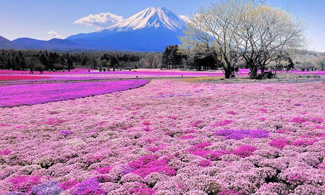 13 Campos de flores maravilhosos - Takinoue Park, Hokkaido, Japão