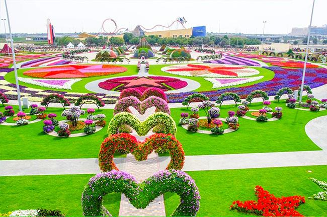 13 Campos de flores maravilhosos - Miracle Garden, Dubai, Emirados Árabes Unidos