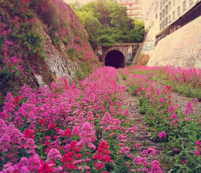 Quando a natureza reclama o seu lugar - caminho de ferro em Paris