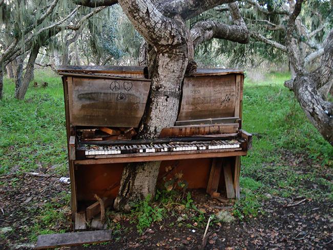 Quando a natureza reclama o seu lugar - the old piano tree, Califórnia, EUA