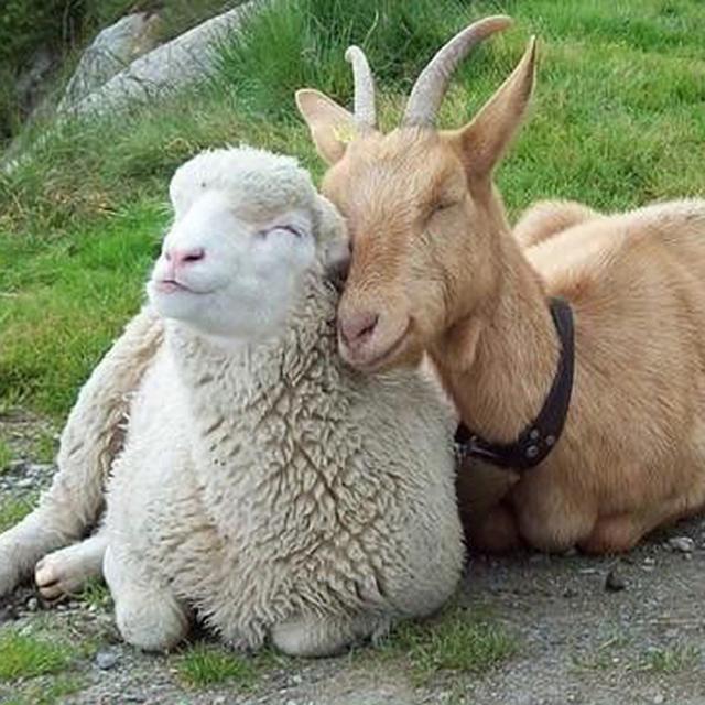 Sorria com os animais mais simpáticos do mundo