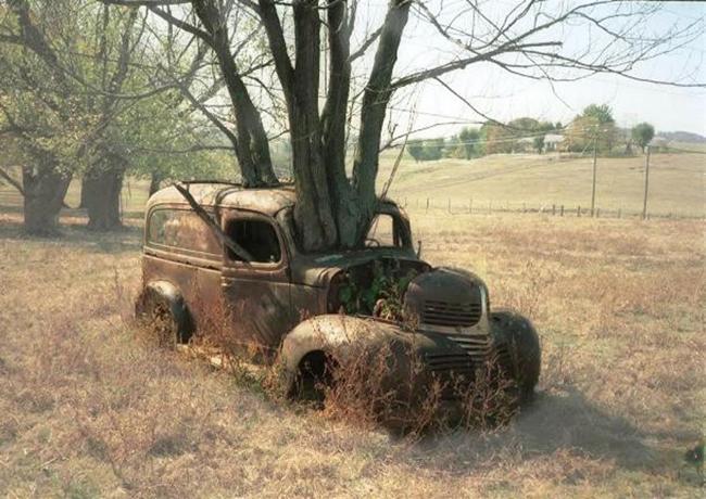 Quando a natureza reclama o seu lugar - pick-up abandonada