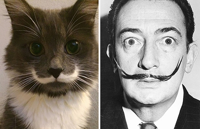 Celebridades que têm um animal parecido com elas - Salvador Dali