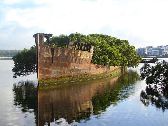 Quando a natureza reclama o seu lugar - navio abandonado, Sidney, Austrália