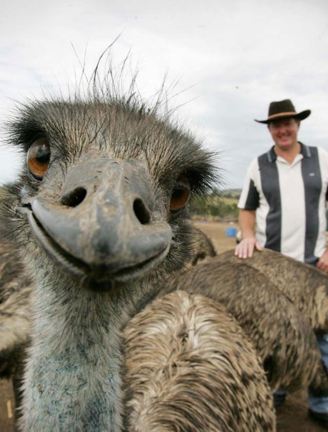 Sorria com os animais mais simpáticos do mundo - avestruz