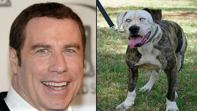 Celebridades que têm um animal parecido com elas - John Travolta