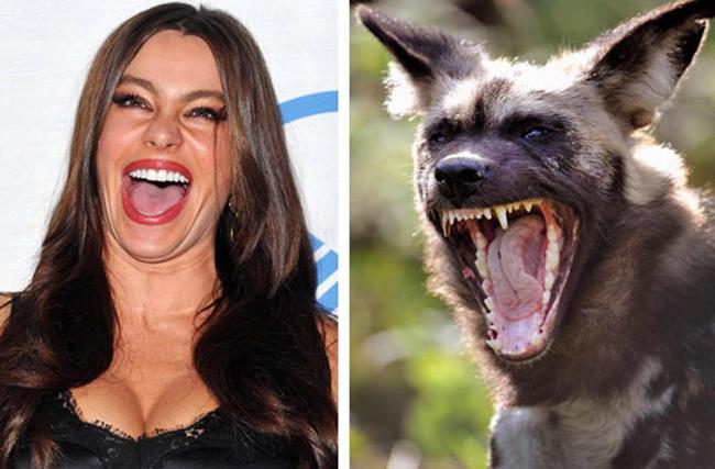 Celebridades que têm um animal parecido com elas - Sofia Vergara