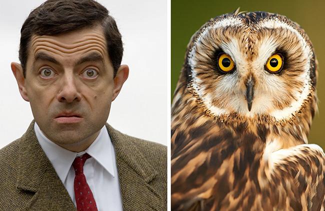 Celebridades que têm um animal parecido com elas - Mr. Bean