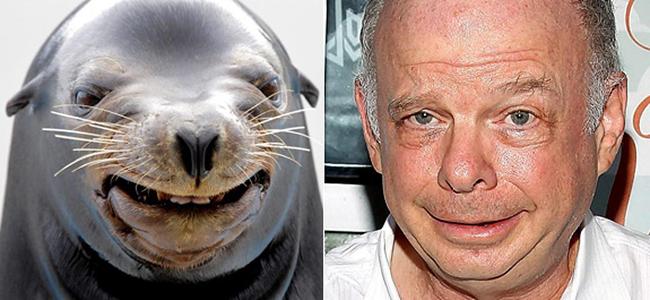 Celebridades que têm um animal parecido com elas - Wallace Shawn