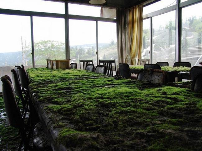 Quando a natureza reclama o seu lugar - escritório abandonado