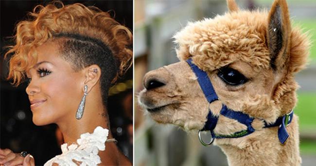 Celebridades que têm um animal parecido com elas - Rihanna