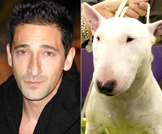 Celebridades que têm um animal parecido com elas - Adrien Brody