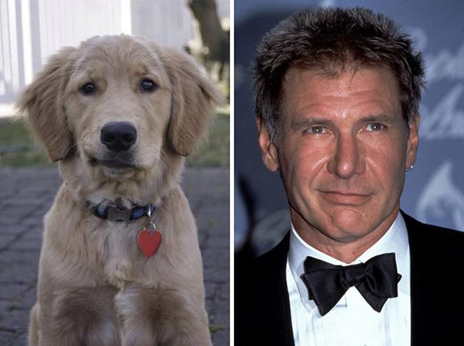 Celebridades que têm um animal parecido com elas - Harrison Ford