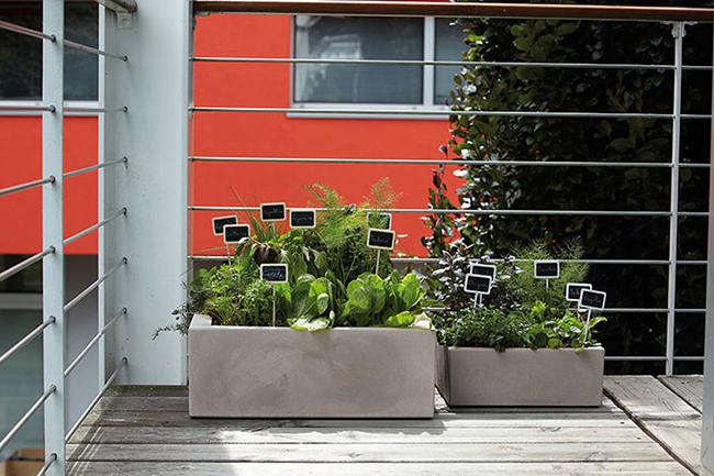 ervas aromáticas, fazer uma horta em casa