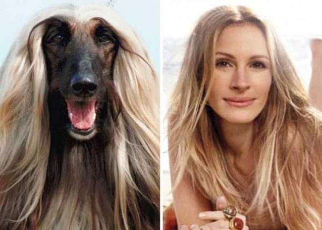Celebridades que têm um animal parecido com elas - Julia Roberts