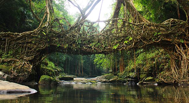 Quando a natureza reclama o seu lugar - Índia