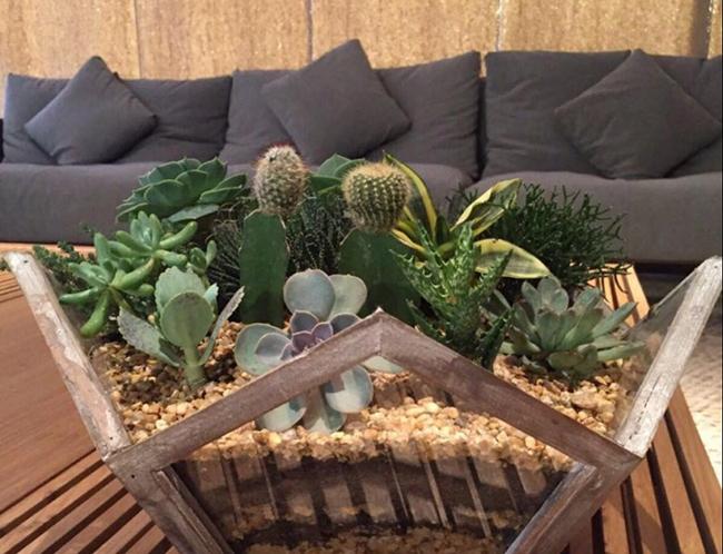jardim do deserto