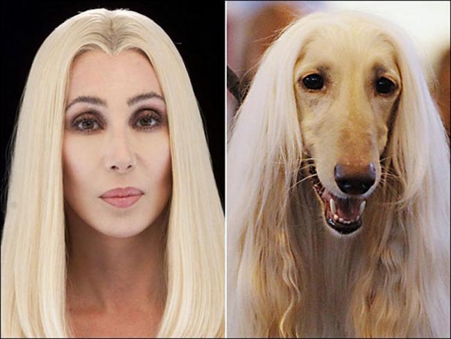 Celebridades que têm um animal parecido com elas - Cher