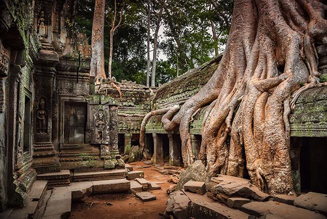 Quando a natureza reclama o seu lugar - Angkor, Cambodja