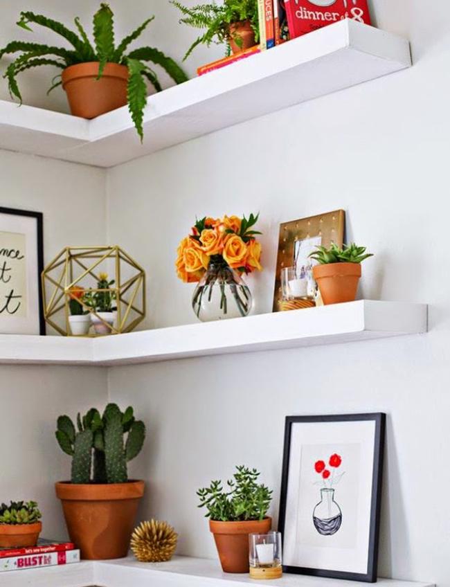 coloque vasos de flores e ervas aromáticas nas estantes