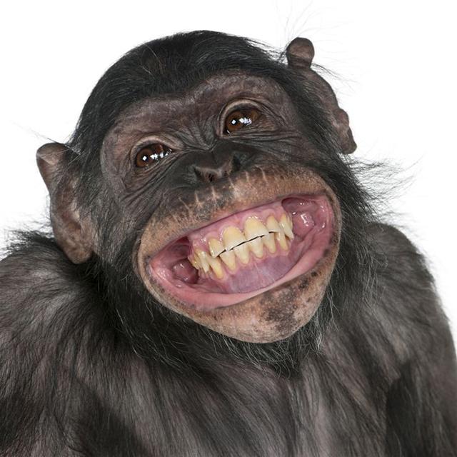 Sorria com os animais mais simpáticos do mundo - macaco
