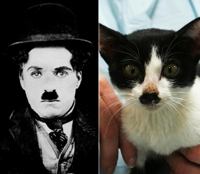 Celebridades que têm um animal parecido com elas - Charlie Chaplin